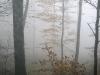 Harz_Herbst07-004