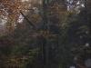 Harz_Herbst07-015