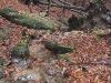 Harz_Herbst07-027