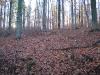 Harz_Herbst07-046