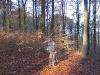 Harz_Herbst07-049