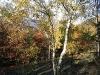 Harz_Herbst07-055