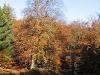 Harz_Herbst07-059