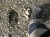Sarek2008_340.JPG